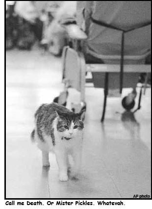 oscarthecat.jpg