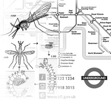 mosquitos in the underground