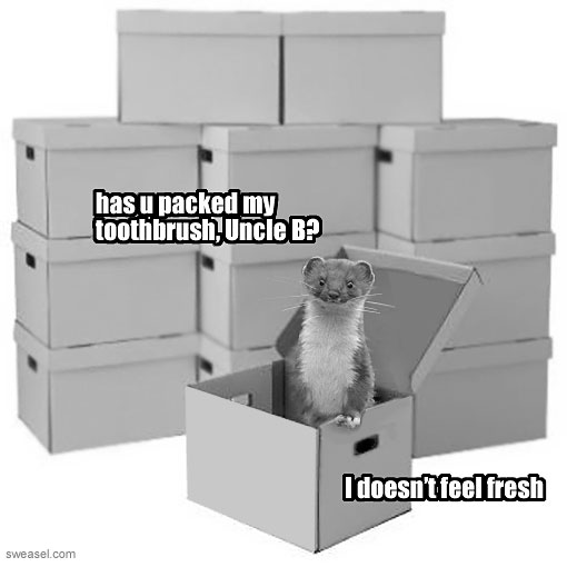 weasel in a box