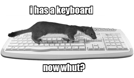 weasel on keyboard