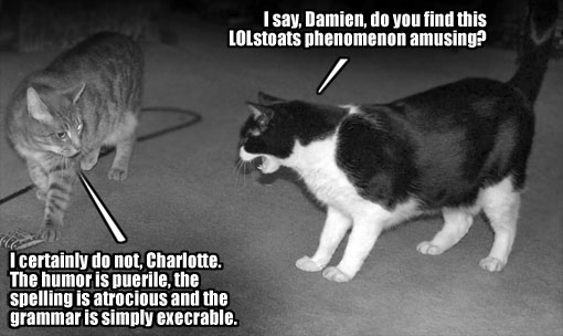 cats discuss lolstoats