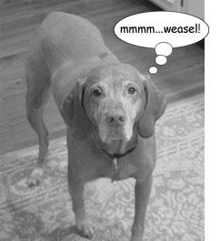 weasel hound