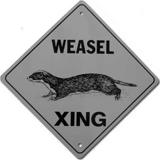 weasel crossing
