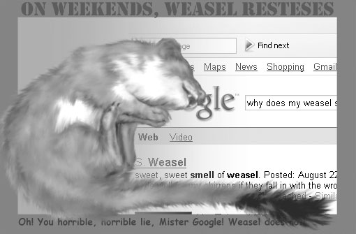 why does my weasel smell
