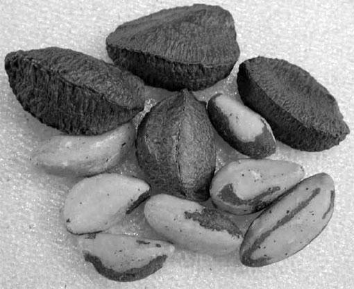 brazilnuts.jpg