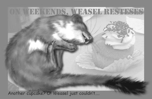 weasel want a cupcake?