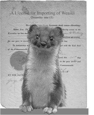 weasel import license