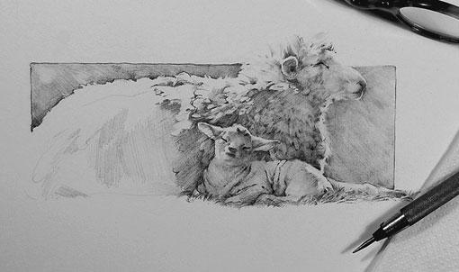 sheepdrawing