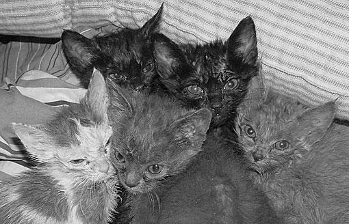 kittehs