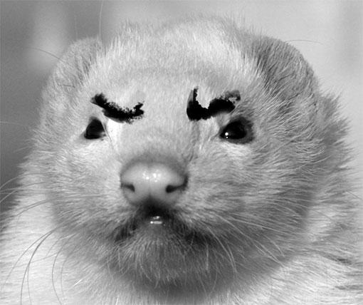 angryweasel