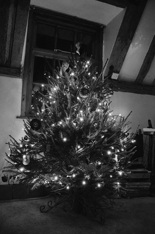 tree17